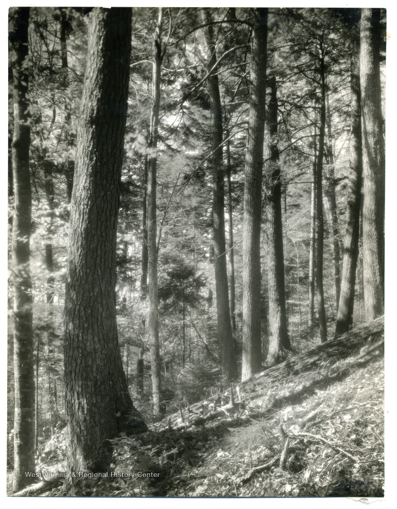'Virginia stand mixed spruce and hardwood, Gauley River. Courtesy of U.S. Forest Service.'