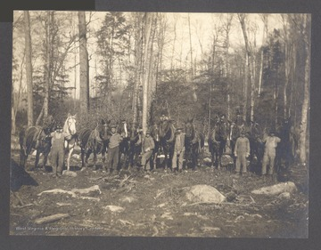 Loggers with horse teams.