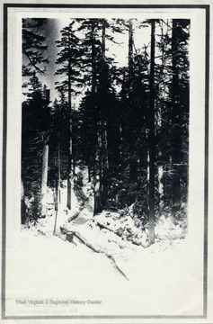 Track of Logs through the forest. O. Homer Floyd Fansler, Hendricks, W.Va.