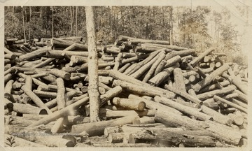 Piles of logs on the edge of the forest.