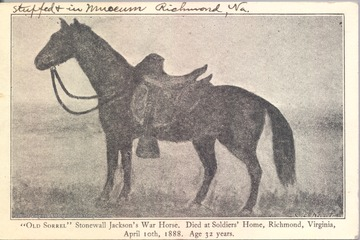 Postcard of Old Sorrel, Stonewall Jackson's Civil War horse. He died at Soldiers' Home, Richmond, Virginia on April 10, 1888 at the age of 32 years.
