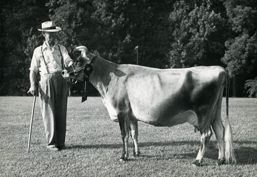 Candid portrait of W.T. Law and his Jersey cow which won the Grand Champion over all Jerseys' at the West Virginia State Dairy Show, Jacksons Mill, 1951. The cows name is Wonderful Bindle Joy. Picture taken in Harrison County.