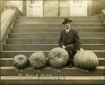 Harvey Harmer displays four of his pumpkins grown in Clarksburg, W. Va., weighing 38, 51, 67, and 104 pounds.