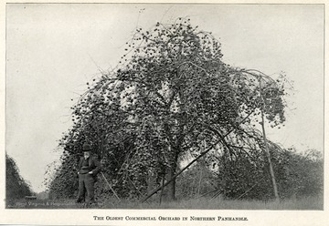 Man standing next to apple tree in the oldest commercial orchard in the Northern Panhandle.