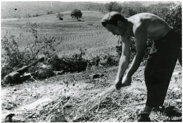 Unidentified man maintaining garden.