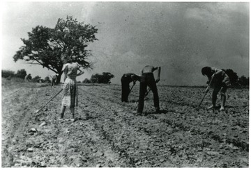 Men and women hoeing a field.