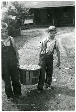 Two boys carry a bushel basket of green beans.
