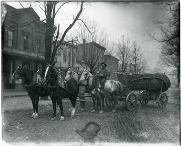 Four horses pull a cart loaded with a very large log.