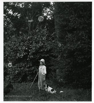 Herbert Stadler is holding a stick and standing with two dogs in a field by a tree in Helvetia, West Virginia.