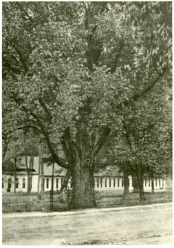 Elm tree planted by George Washington when he was laying out the Town of Bath.