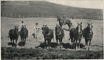 Farm scene with men and horses at the Second Hospital for the Insane.