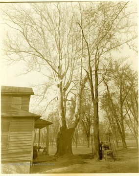 View of building with large tree and small fenced in area on Blennerhassett Island.