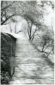 View of wooden planked walkway 'Lovers Lane' in Webster County. 'No one ever comes to Webster Springs who foregoes the pleasure of making out on Lovers Lane.' Echo, May 13, 1910.