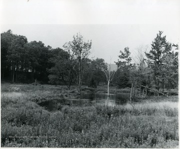 View of trees and small pond at Canaan Valley.