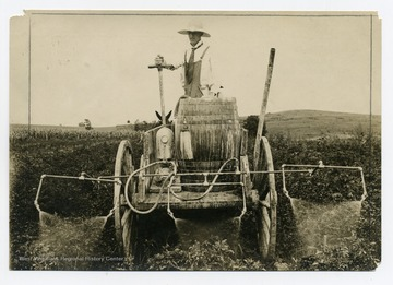 A worker operates on a horse drawn sprayer to spray the crops.