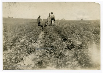 A man sprays the crops while other watches.