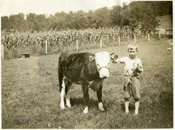 'Guy Ireland of Pullman W. Va.. Guy has his calf well trained to stand and lead.'