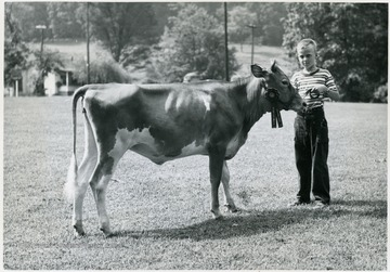 'Tommy Nay, Jane Lew, R-1, and his Grand Champion Guernsey heifer at the State 4-H Dairy Show, held at Jackson's Mill.'  Harrison County 4-H.