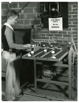 A man examines eggs with an egg grading machine.