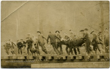 Men and boys pull cattle across railroad tracks.