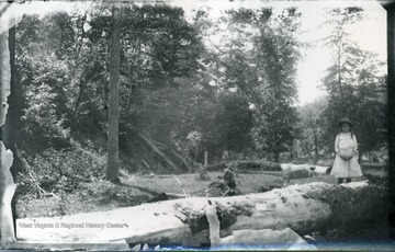 A picture of a wooded landscape with a small girl standing on the right. '3 W (1); July 30, 1884'