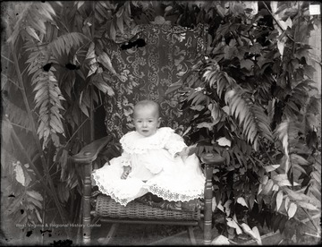 A portrait of infant in wicker chair set in backyard foliage.