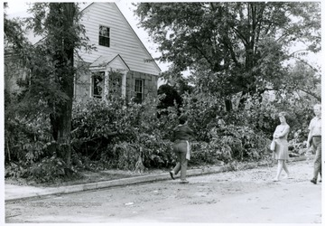 Felled trees after the tornado, a view of East Street, Bridgeport, W. Va.