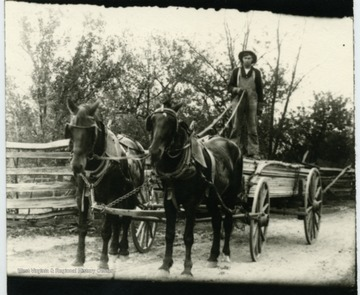 Carrying lumber with horse and wagon.