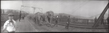Circus elephants are lead across the Ohio River as several spectators watch including a delighted little boy on the left. None of the subjects are identified.