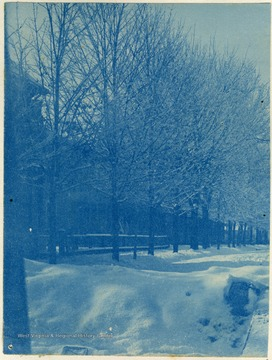 This image was develop with, among other chemicals, cyanide, resulting in a blue colored print. The prints are called cyanotypes.