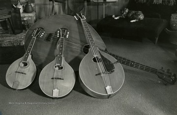 Smallest to largest instruments: mandolin, mandola, mandocello, and mandobass