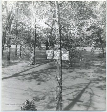"A sign on the tree reads, ""For Rent: Camp Site Wonder Land of Picnic Table, $1""."