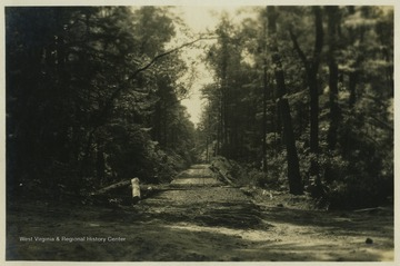 An early image of the entrance to Cooper's Rock State Forest before gates or other structures were built.  During the Great Depression the Civilian Conservation Corps built a number of structures for the State Forest.