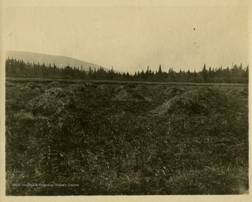 "This image is part of the Thompson Family of Canaan Valley Collection. The Thompson family played a large role in the timber industry of Tucker County during the 1800s, and later prospered in the region as farmers, business owners, and prominent members of the Canaan Valley community.Caption on back of photo reads: ""Glade on Glade Run, 1906, McDonald Glade""."