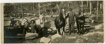 This image is part of the Thompson Family of Canaan Valley Collection. The Thompson family played a large role in the timber industry of Tucker County during the 1800s, and later prospered in the region as farmers, business owners, and prominent members of the Canaan Valley community.Two teamsters seen with four horses in a logging site in Davis, W. Va.