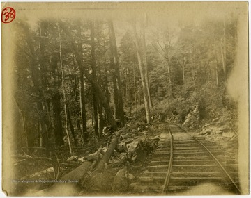 This image is part of the Thompson Family of Canaan Valley Collection. The Thompson family played a large role in the timber industry of Tucker County during the 1800s, and later prospered in the region as farmers, business owners, and prominent members of the Canaan Valley community.Scenic view of railroad running through a forest.