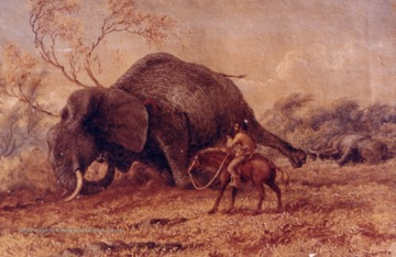 A watercolor painting by Thomas Baines of an elephant killing. Obtained from the Transvaal Museum, Pretoria, South Africa.