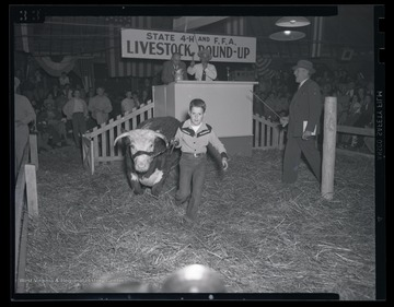 A boy leads an animal to the auction space.