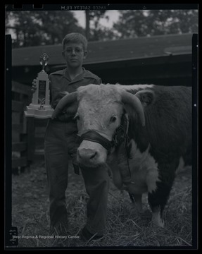 An unidentified boy poses beside his prize animal, holding a trophy.