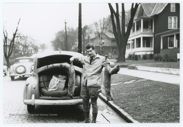 A man stands at the trunk of a car and holds up two dead foxes.  Inscription on reverse says photo is from VE Day 1945.
