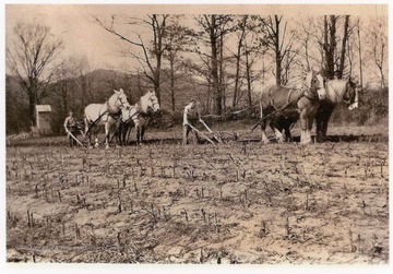 Plowing on Felton farm, located on the west bank of the Cheat River, north of the town of Parsons, W. Va.  Visible in the background is the Monongahela Power Company gauge house, which would measure the depth of water in the river.The two plowmen are Fred Felton, on the right, and Otto Plum, on the left.  Jack Felton was present, but is not pictured.  Draft horses pictured were owned by John Harold Felton, assessor of Tucker County and proprietor of the Holly Meadows Dairy.