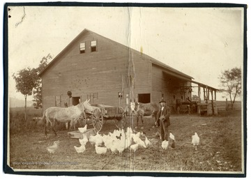 "A view of Anderson's barn with one man, several chickens, and two mules in front. Text on back reads, ""Now the site of St. Mary's Catholic Church. A bum stayed in this barn one night and burned it down, killing all thirteen horses."""