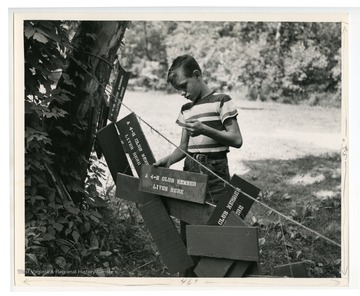 "A young boy hangs signs after a craft.  The signs read ""A 4-H Club Member Lives Here."""